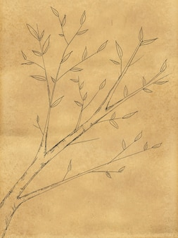 Disegno della pianta di ramo sulla lavagna