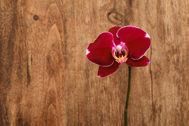 A branch of red orchids on a brown wooden table