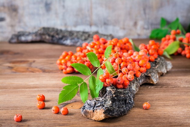 A branch of red rowan with berries and leaves on a piece of tree bark on woodtable