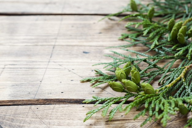 Branch thuja on wooden background with copy space.