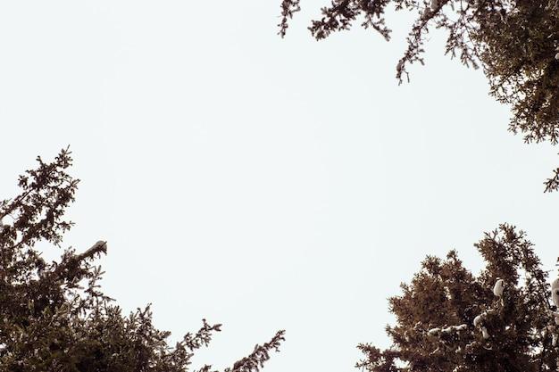 Ветка дерева под низким углом