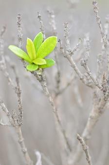 枝木グリーン