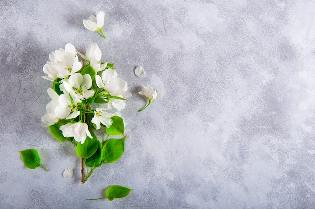 Branch of a white blooming apple tree on a light gray background top view