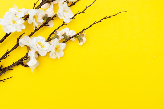 Branch of white flowers on yellow background spring floral mock up. minimalistic spring background with copy space.