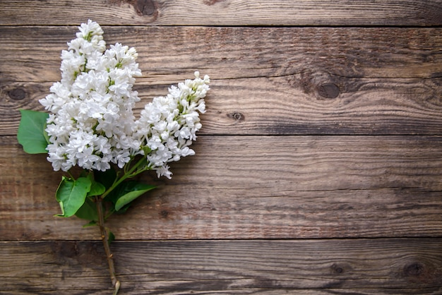 Branch of white lilac on a wooden background