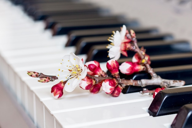 Branch with apricot flowers on the piano keys. romantic music_