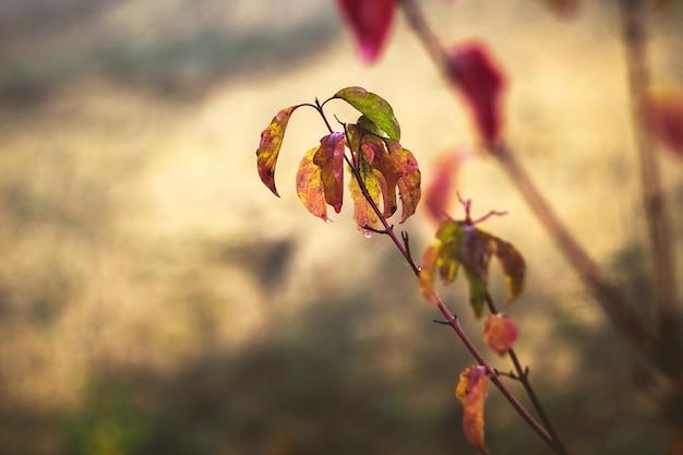 秋の色とりどりの葉と露の滴の枝