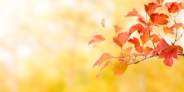Ветвь с осенними красными листьями на ярко-желтом фоне.