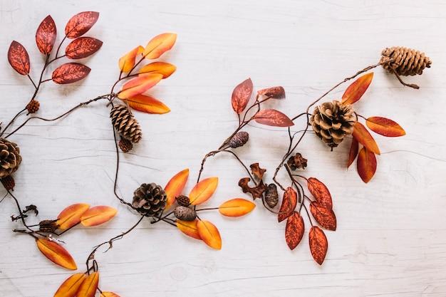 カラフルな葉の枝