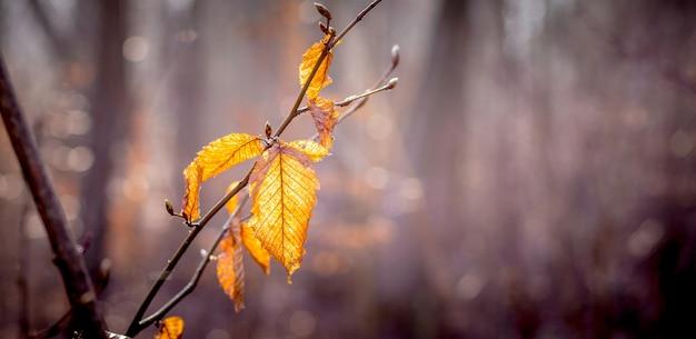 Ветка с сухими осенними листьями на ярком солнце в темноте