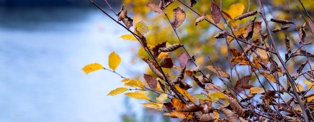 ぼやけた背景の川の近くの乾燥した紅葉の枝。秋の背景