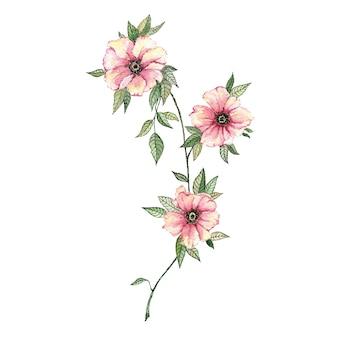 白に描かれた花と葉の水彩画で枝