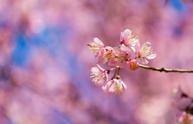 Branch with flowers with defocused background