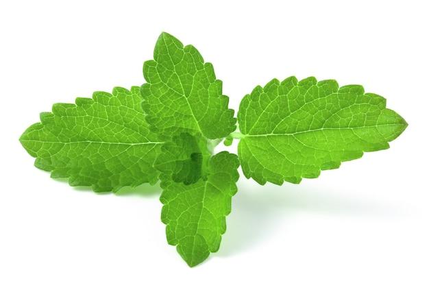 흰색 배경에 고립 된 신선한 민트 잎 지점