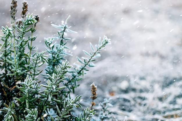 降雪時の緑の葉の枝