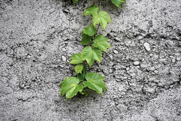 石の壁に緑の葉で枝