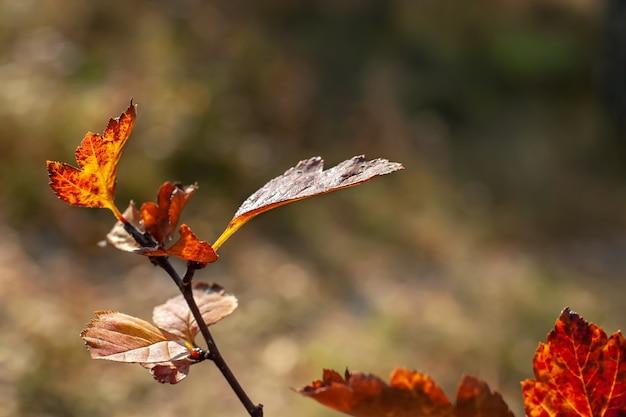 秋の太陽の下で葉を持つ枝