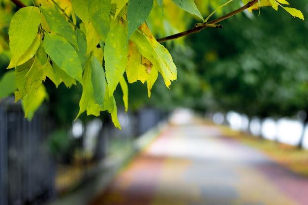 都市公園の路地の背景に葉と枝