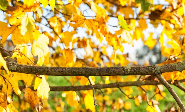 Branch with natural background