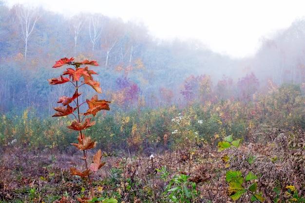 秋の木の上のオークの赤い葉を持つ枝