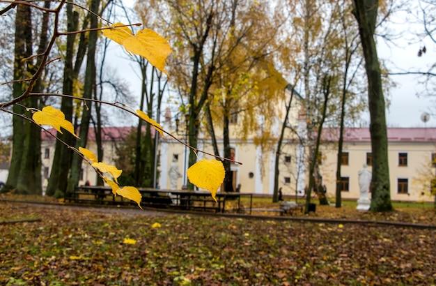 Ветвь с влажными листьями березы на старом доме. дождливый осенний день