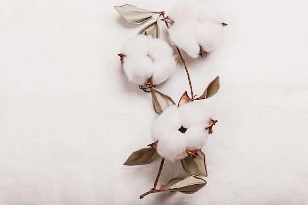 有機亜麻から白い背景に白いふわふわの綿の花と枝