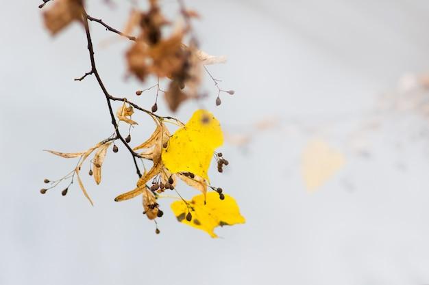 黄色い紅葉の枝