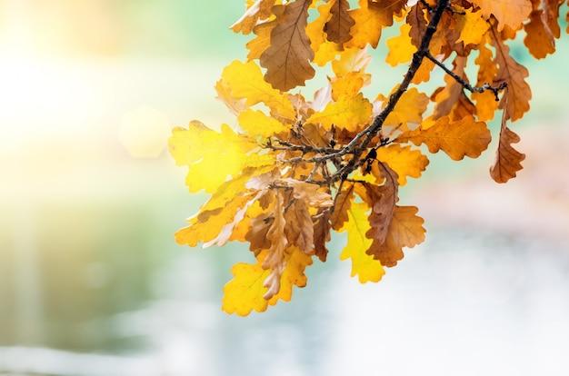 夕日の光のまぶしさにぶら下がっている黄色い紅葉の枝。