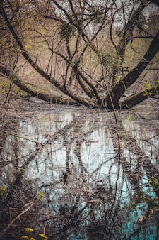 Ветвистое дерево, растущее на болоте с желтыми цветами весной