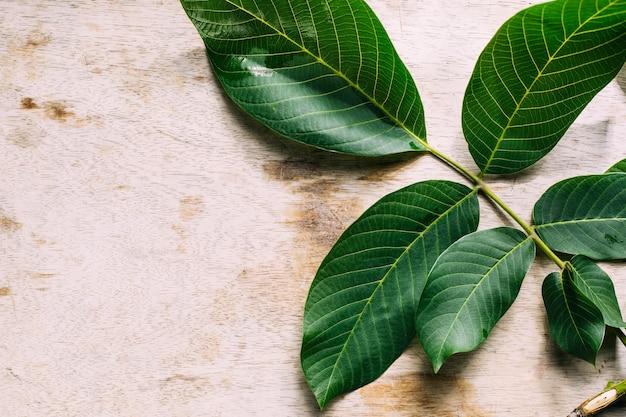 木製の背景にクルミの枝と葉