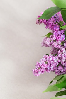 Branches of blooming lilac flowers