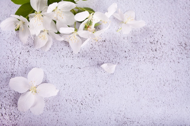Branches of a blossoming apple tree on concrete background. top view
