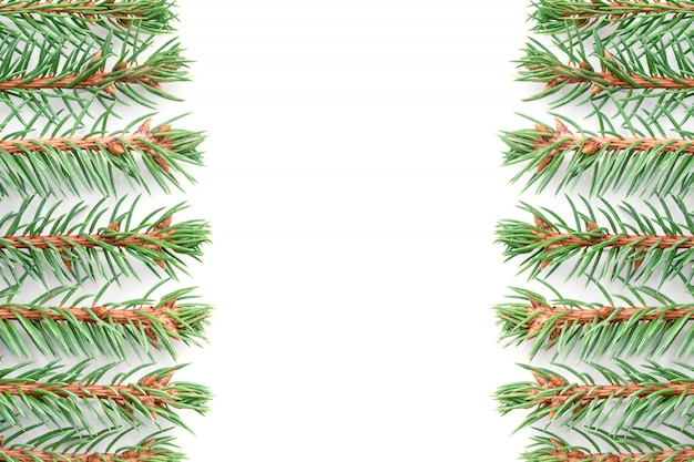 Branches of blue spruce lie horizontally in even rows on a white background symmetrically relative to the middle.