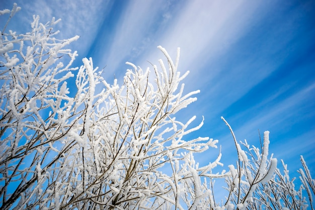 Branches covered with frost against  picturesque backdrop of the sky.