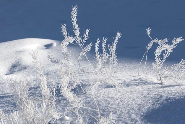 冬は霜で覆われた枝