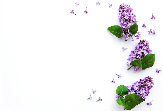 Branches and flowers of lilac on a white background,  top viev, flat lay, copy space for  easter, mother's day, women's day