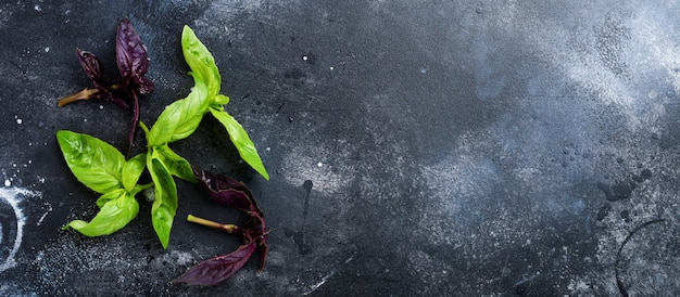 Branches of fresh green basil on a dark old table background. flat lay