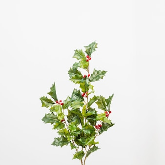 Branches of holly with berries