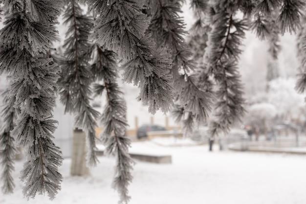 冬の霜と雪の枝。凍った木、コンセプトフロスト、一時的、冬、寒い