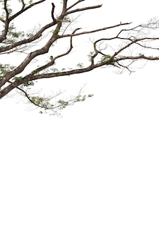 Branches isolated on white background. clipping path.
