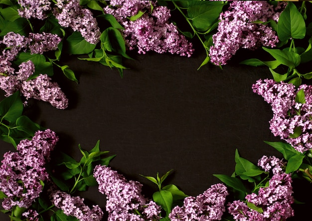 Branches of lilac on a black background