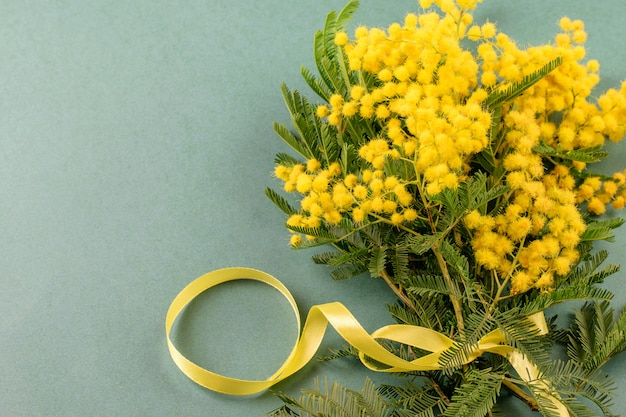 Branches of mimosa on the green background