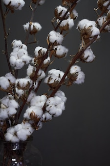 Branches of natural cotton in a glass vase on a dark , christmas