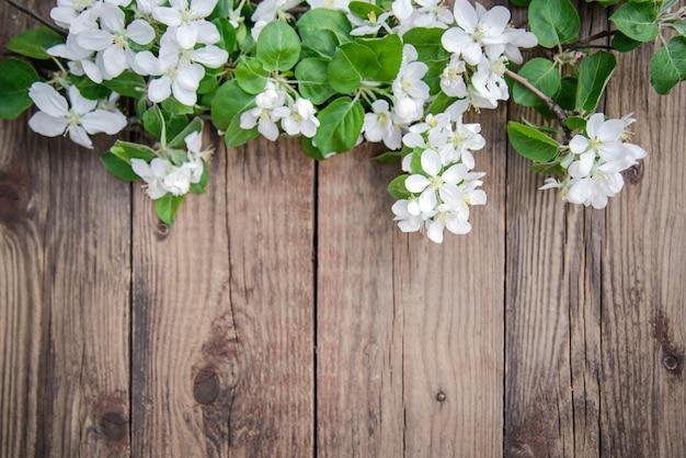 Ветки цветущей яблони с белыми цветами