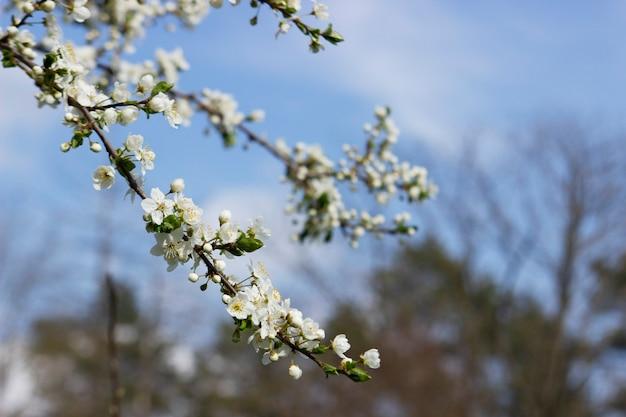 하늘에 꽃이 만발한 나무의 가지