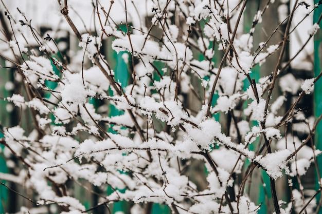 Ветви дерева покрыты инеем зимой морозные деревья в заснеженном лесу.