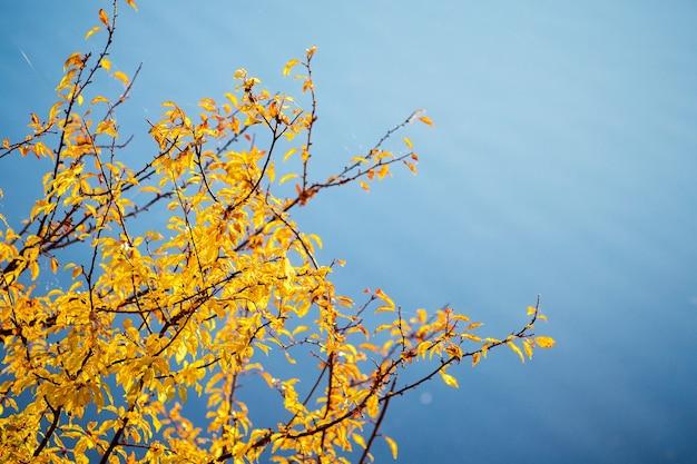 紅葉の木の枝