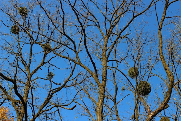 Ветки дерева без листьев
