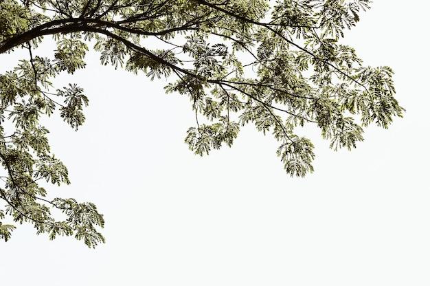 Ветви дерева