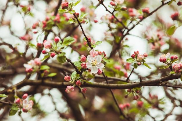 사과 나무의 가지